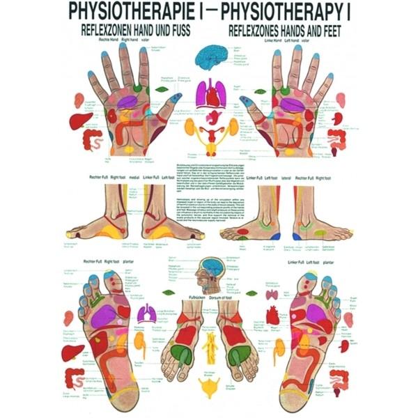 naucny-plakat-fyzioterapie-i-297